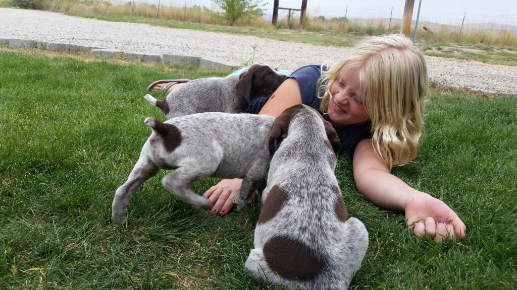 German Shorthair Pointer Puppies